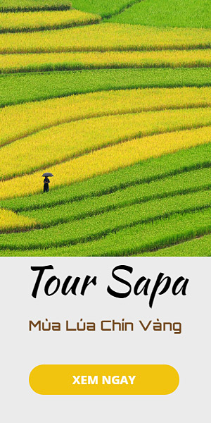 tour Sapa lúa chín
